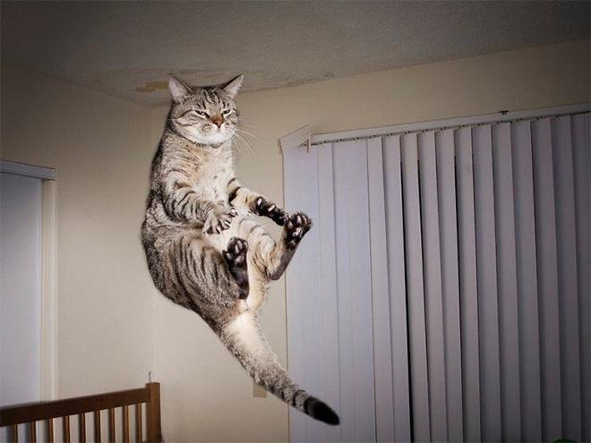 gatti divertenti richiamati da astronave madre come piccoli alieni
