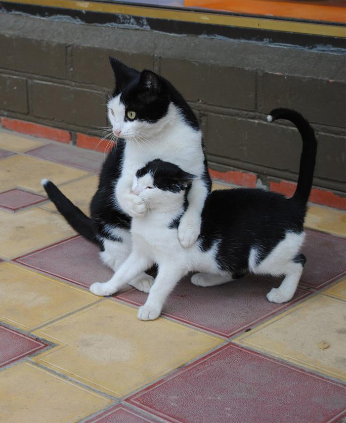 03.gatti