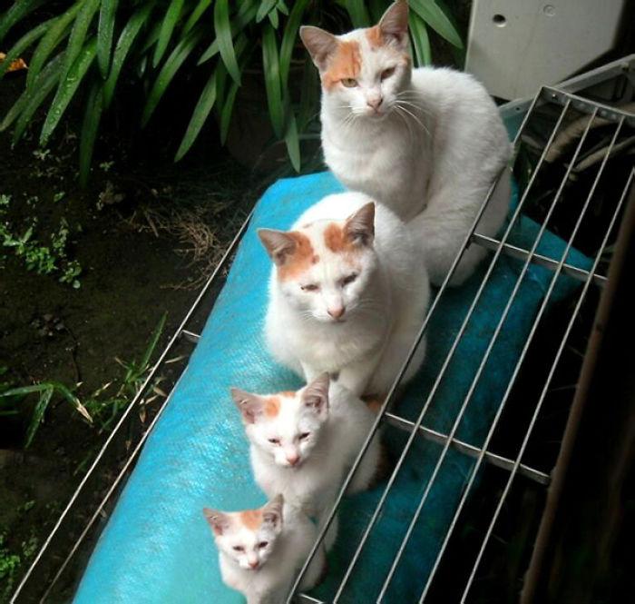 09.gatti