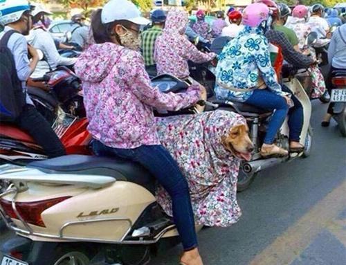 11_estate vietnamita